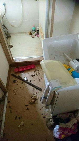 動物の糞が散乱したお部屋の施工前