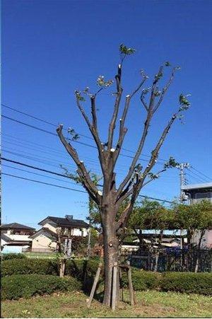 木の手入れの施工後