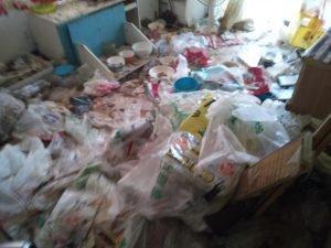 猫の糞、臭いの清掃依頼の施工前