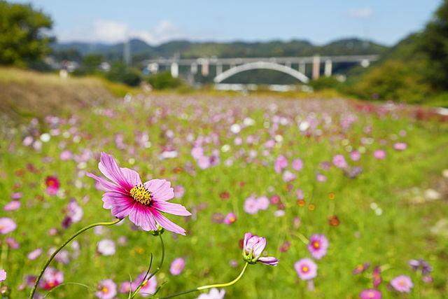 神奈川県相模原市中央区の遺品整理の特徴