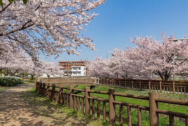 埼玉県さいたま市見沼区の遺品整理の特徴