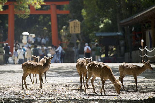 奈良県の遺品整理の特徴