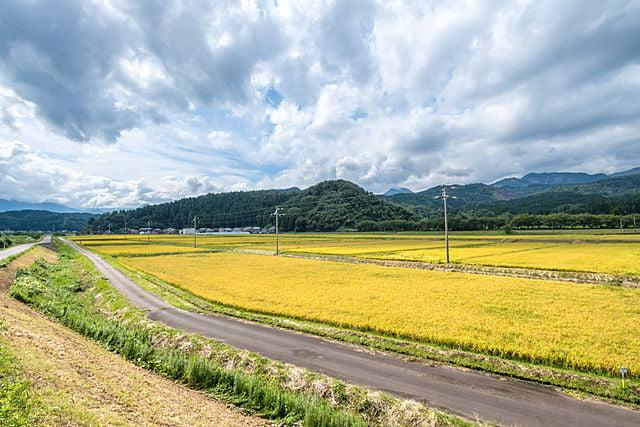 新潟県の遺品整理の特徴